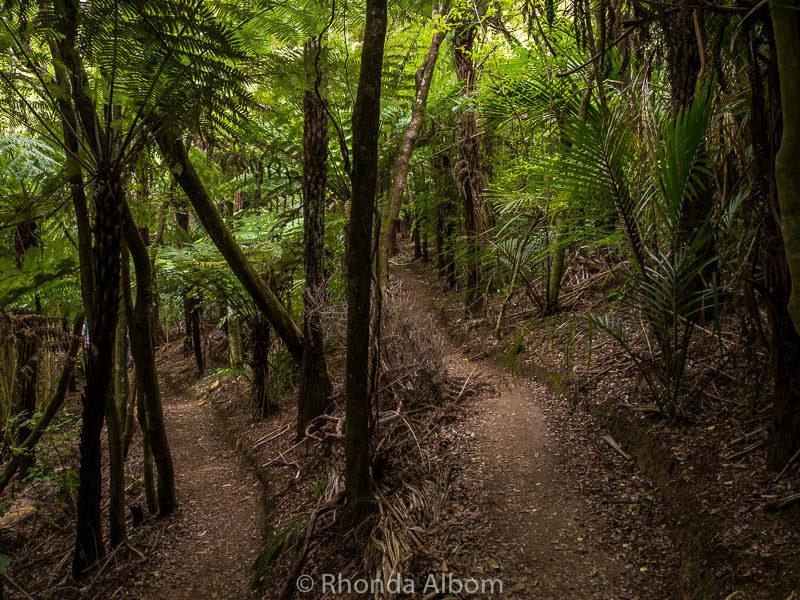 Hiking at Eco Zip on Waiheke Island Auckland New Zealand