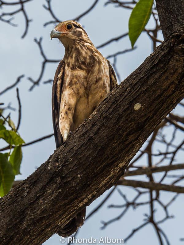 Bird seen in Cartagena Colombia