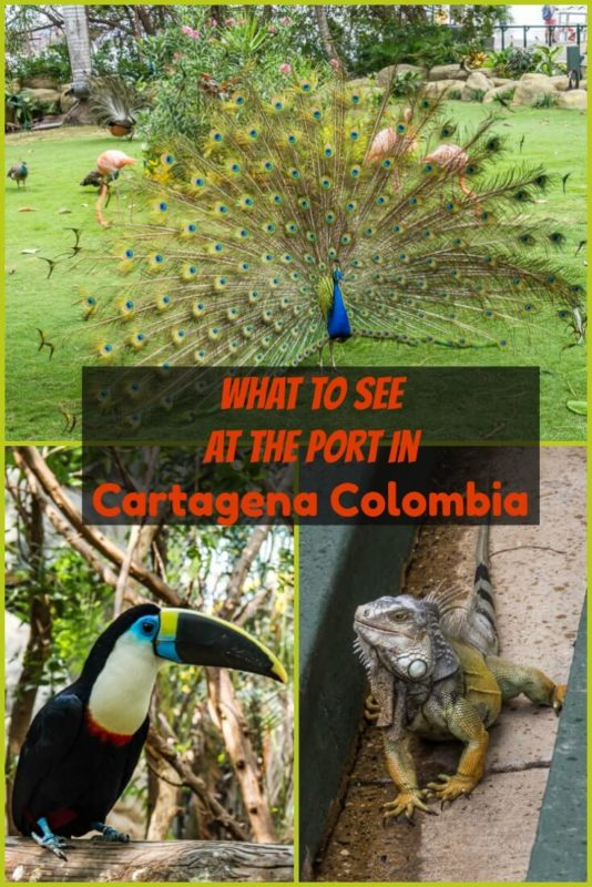 So many varieties of native animals protected at the award-winning and sustainable port oasis located at the cruise port terminal in Cartagena Colombia.