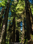 Giant Redwood Trees of California Put Life in Perspective