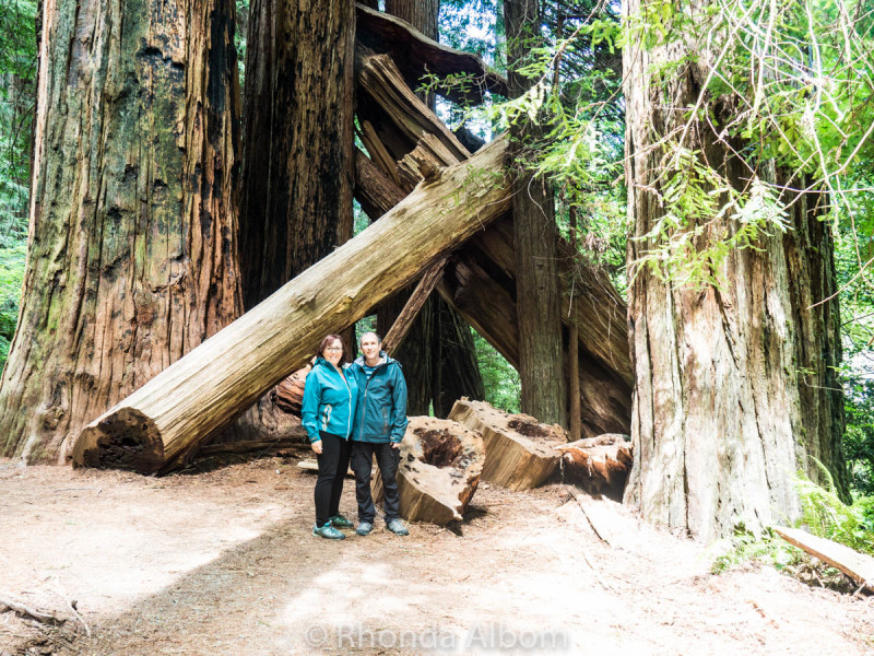 Jedediah Smith Redwoods State Park 2