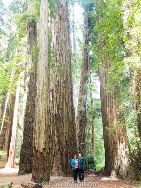 Jedediah Smith Redwoods State Park 3