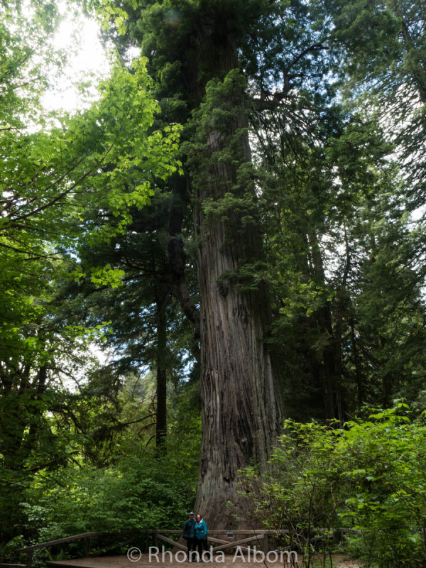 Prairie Creek Redwoods State Park, California, USA