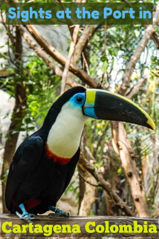 This is one of several varieties of toucan at the award-winning and sustainable port oasis located at the cruise port terminal in Cartagena Colombia.