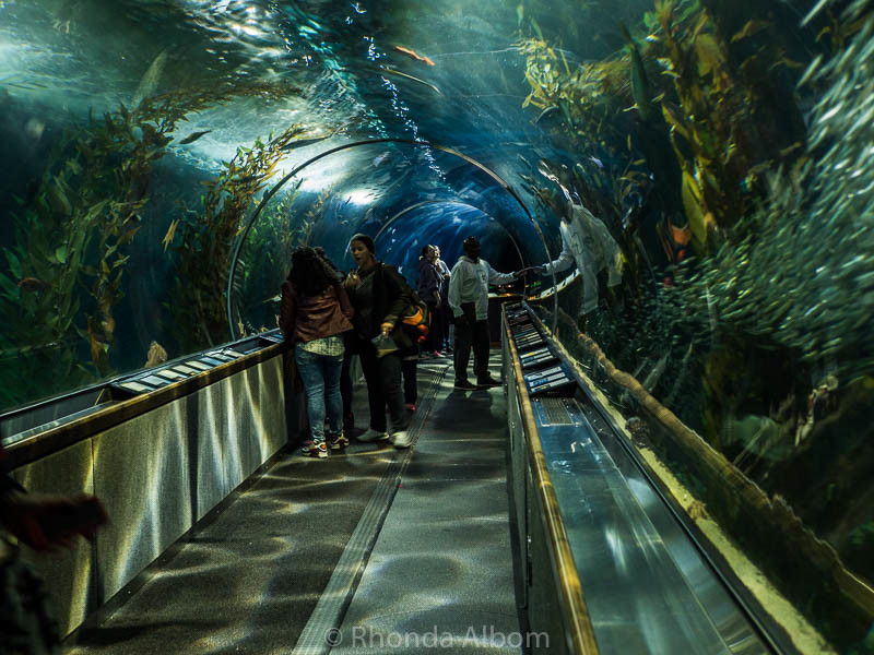 Tunnels at the Aquarium by the Bay in San Francisco California