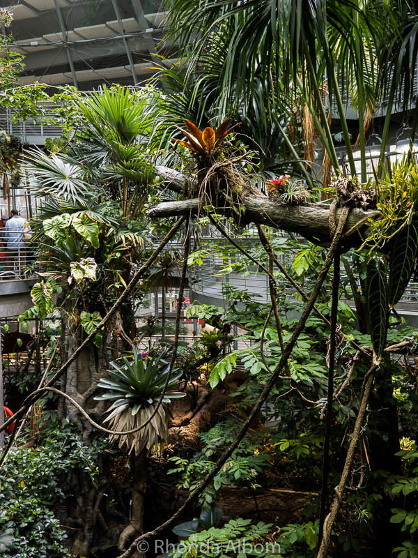 The four story living rainforest in the California Academy of Sciences in San Francisco, CA.