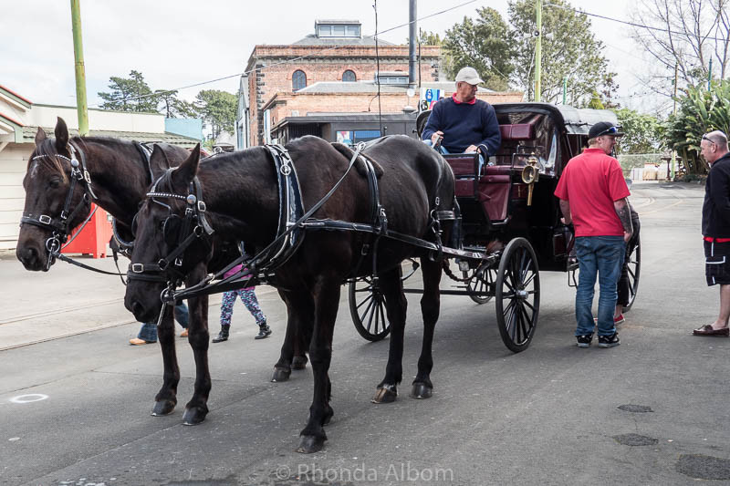 Horse and carriage rides at the MOTAT Live Day in Auckland New Zealand