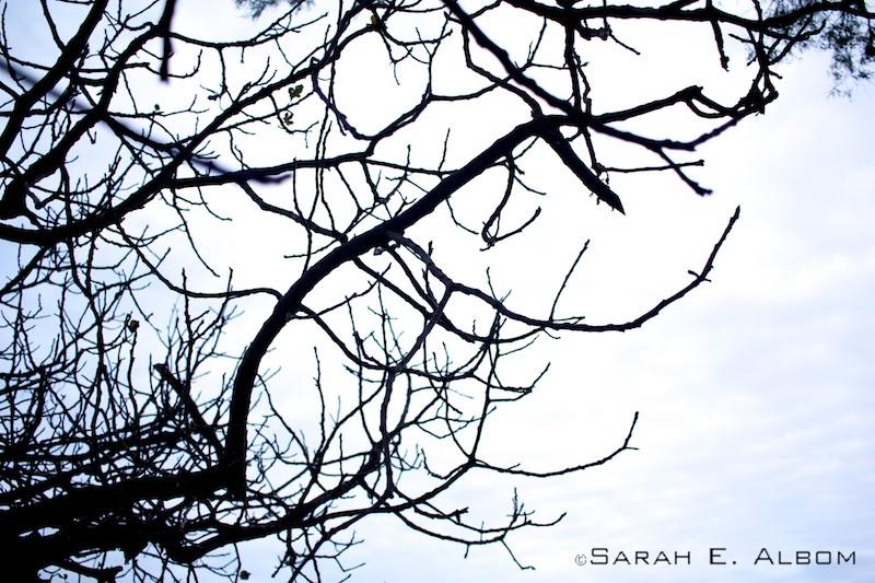 Tree on el campo in Rosario, Argentina. Photo copyright ©Sarah Albom 2016
