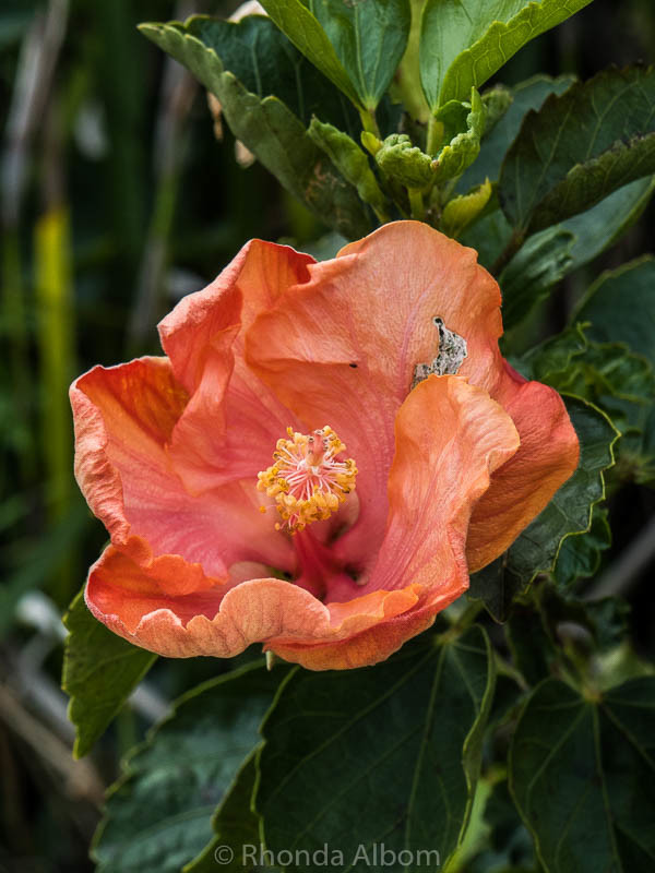 A flower at New Zealand's Oldest Church located in Russell