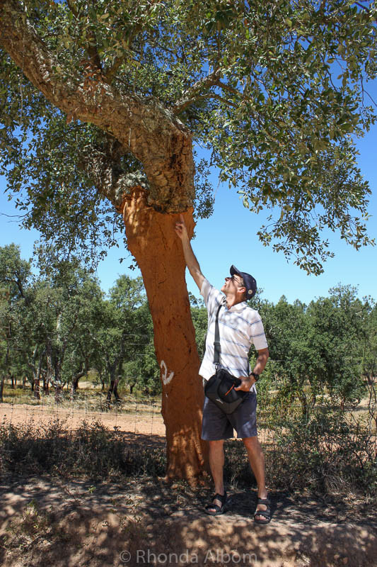 Cork tree outside Evora Portugal