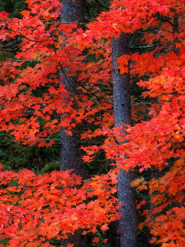 Vibrant fall foliage in Vermont USA