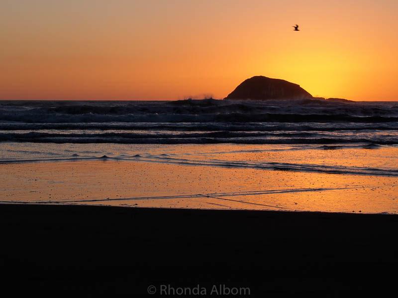 Muriwai Beach at sunset in New Zealand