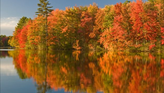 Fall foliage reflection in Maine USA