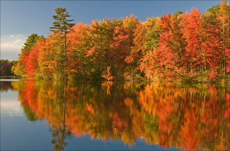Peak fall colors in Maine foliage in the USA