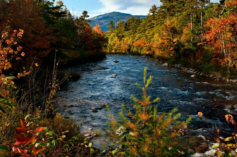Beautiful autumn colors seen along this river in North Conway, New Hampshire USA