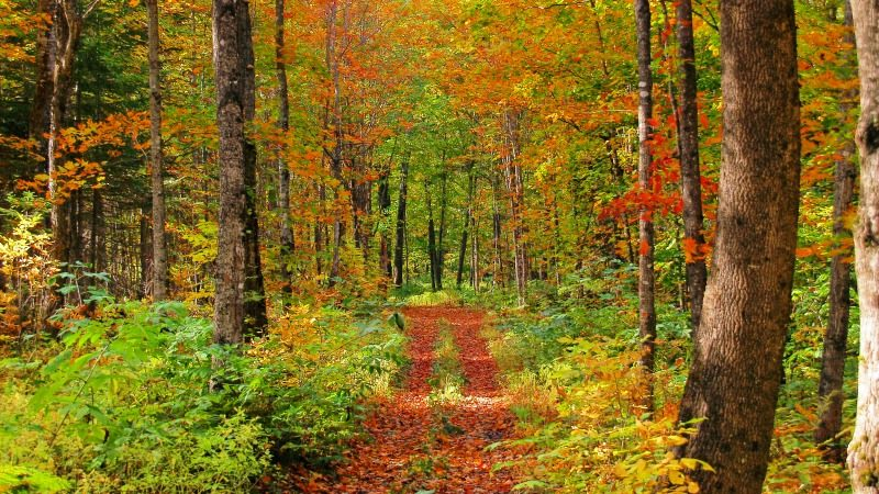 Autumn fall foliage trail in Arrostook County, Maine USA