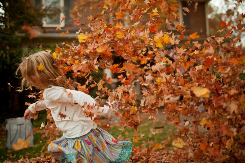 Child playing in the leaves in Salem, Massachusetts USA