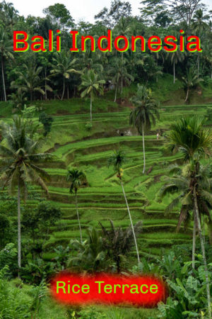 The Tegalalang rice terrace is one of many sites we photographed in our day in Ubud on the island of Bali, Indonesia.