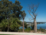 Photos of Kings Park and Botanic Gardens in Perth Australia