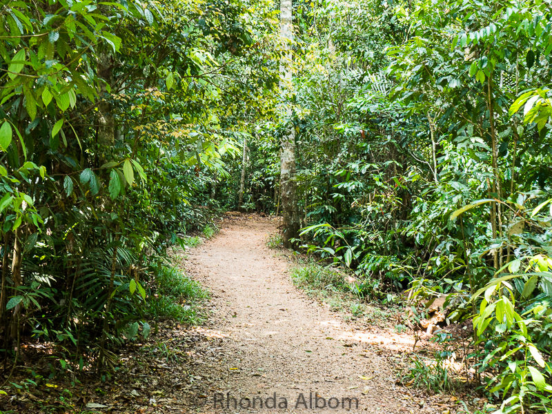 The rainforest path leading to Zellie Falls.