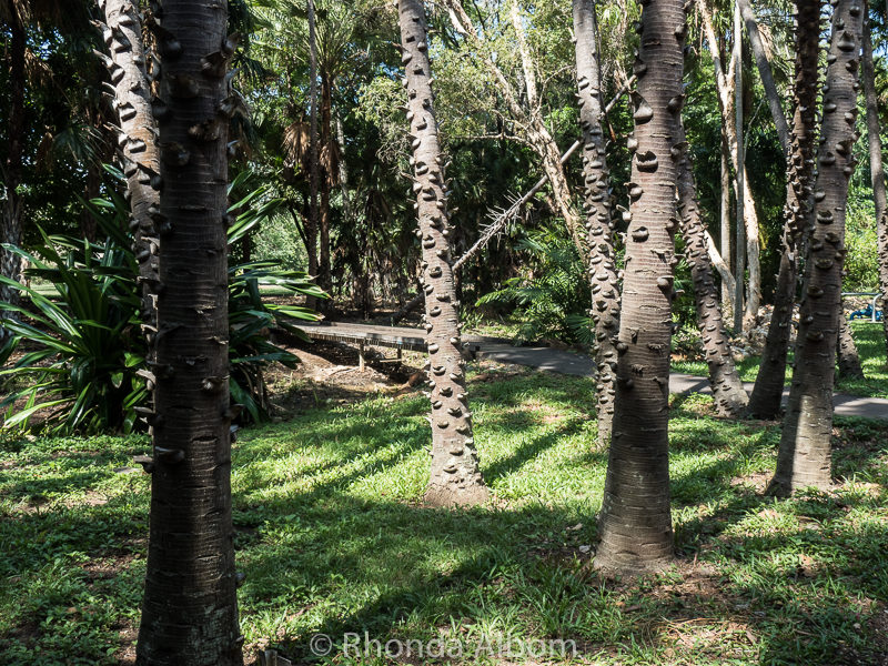 George Brown Botanic Gardens in Darwin Australia
