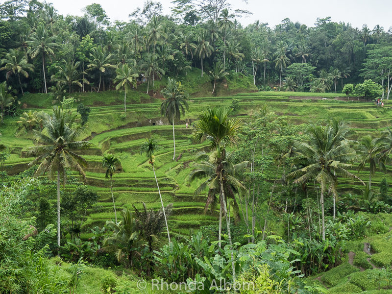 Tegalalang Rice Terrace in Bali, Indonesia