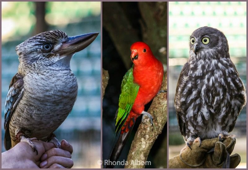 Australian Birds including a kookaburra and an owl
