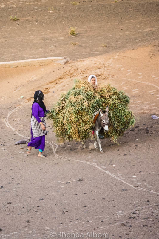 Women carrying the crops on a donkey in the Sahara in Morocco