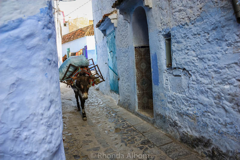 Donkey on a street in Chefchaouen, the Blue City in Morocco.