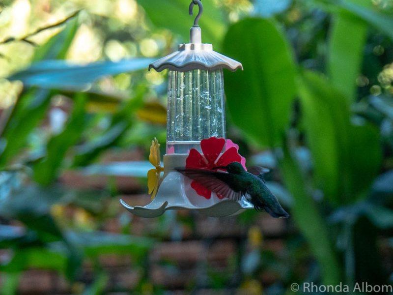Jardín de los Picaflores (Hummingbird Gardens) in Puerto Iguazu Argentina