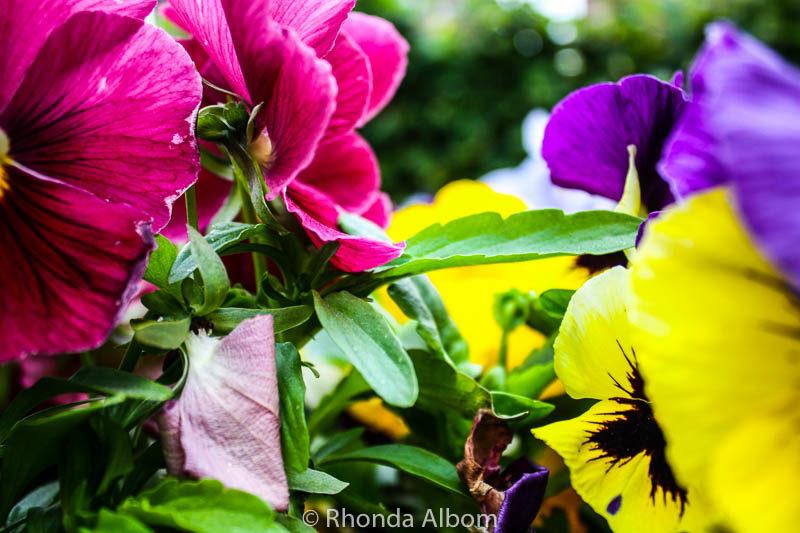 Flowers in Norway