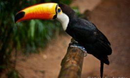 Sarah's Sunday Snapshots – Parque das Aves in Brazil