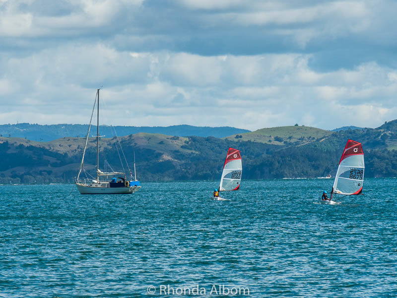 The Open Bic class sailing at Manly, New Zealand