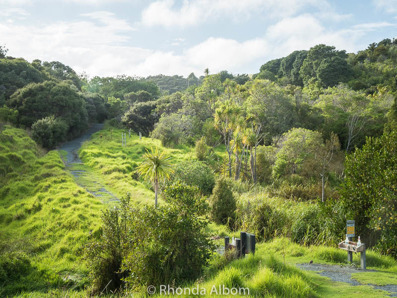 Just beyond the entrance gate to the Waterfall Gully hike in Shakespear Park, Auckland New Zealand