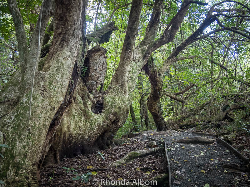 Waterfall Gully trail in Shakespear Park, Auckland New Zealand