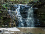 Waterfall Gully: A Hike Through Shakespear Park in New Zealand