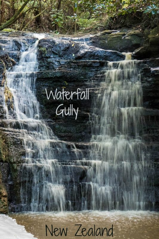 Waterfall Gully after a rainstorm in Shakespear Park, Auckland New Zealand