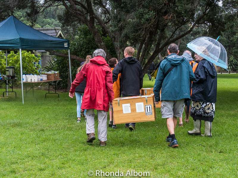 Kiwi Bird Release in Shakespear Regional Park in Auckland New Zealand