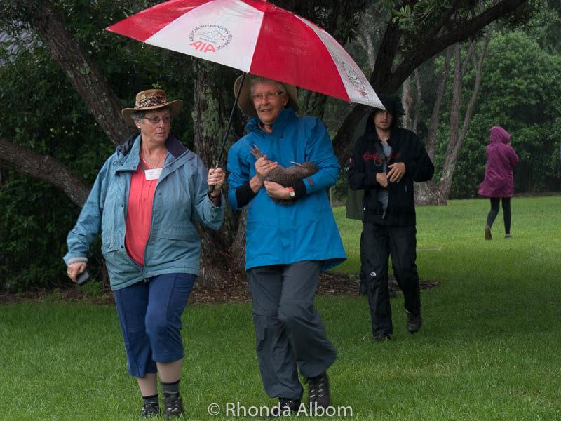 Kiwi bird carried in the rain