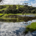 Flooded grasslands at Shakespear Park, Auckland New Zealand
