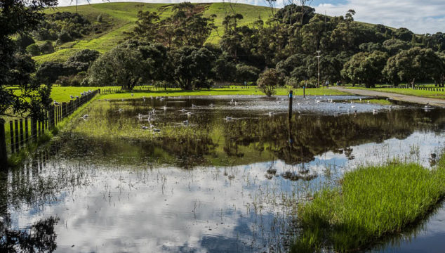 Shakespear Park After the Cyclones: Landslide, Floods and Happy Birds