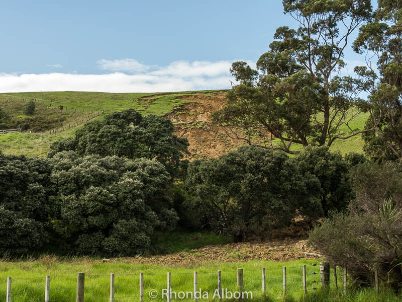 Land slip in Shakespear Park, Auckland New Zealand