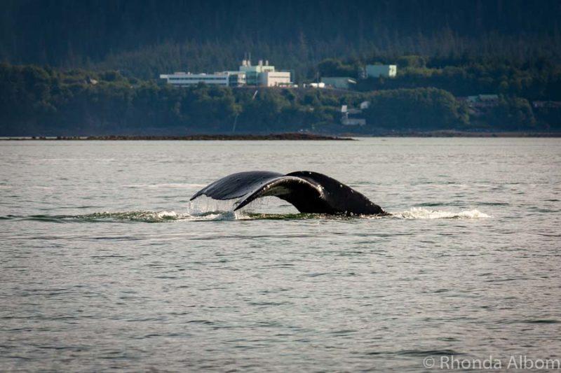 Whale watching in Juneau Alaska