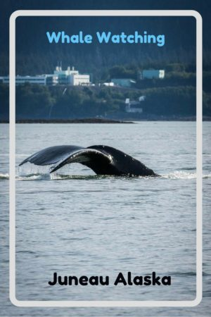 Whale watching in Juneau Alaska. Read the article to see our photos of whales, seals, forest, glaciers and more.