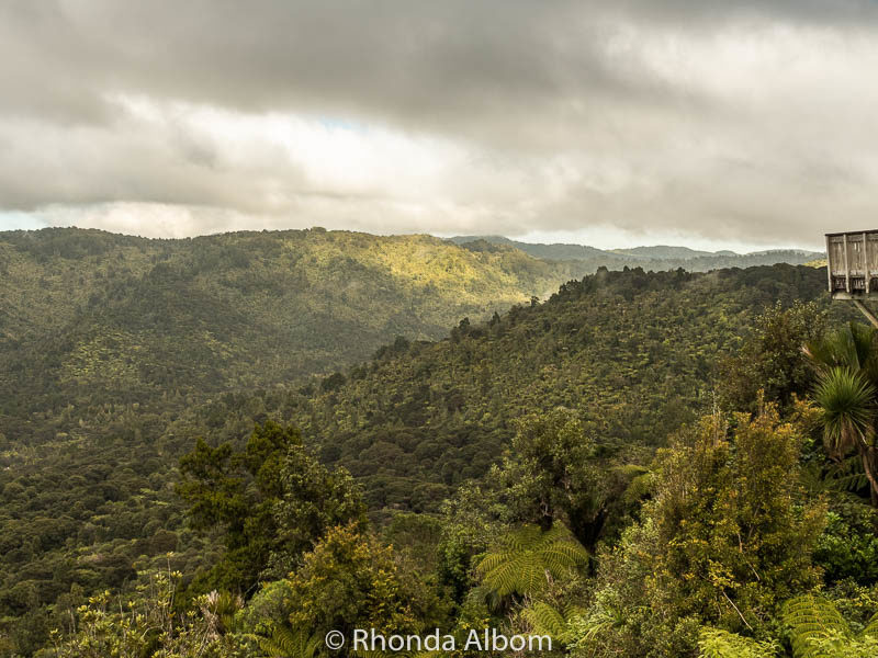 Looking out over the Waitakere Ranges, New Zealand