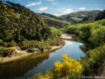 One of the views from the Taieri Gorge Train, a Dunedin railways adventure on the South Island of New Zealand
