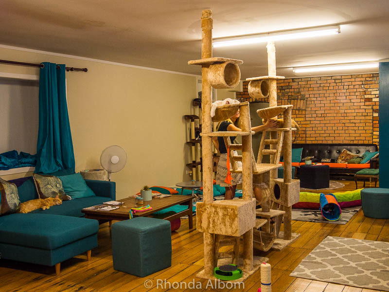 Cat Cafe in Auckland New Zealand