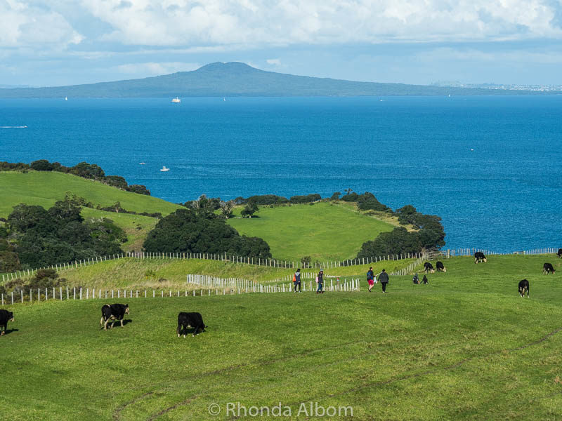 Shakespear Park with Rangitoto Island in the background. Hiking Auckland New Zealand