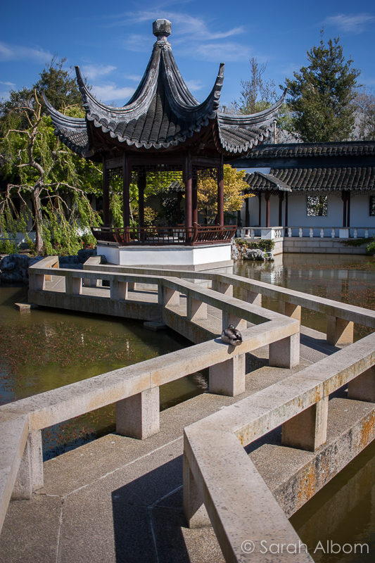 Zigzag Bridge At The Dunedin Chinese Garden New Zealand
