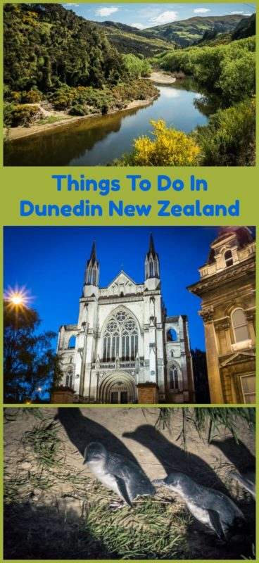 Dunedin is New Zealand's garden city, teeming with wildlife, interesting architecture and plenty of things to do. Read the article to see some of the best of this southeast corner of New Zealand's South Island.